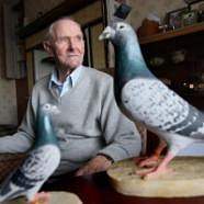 DICKIN MEDAL-WINNING PIGEON PADDY HONORED WITH PLAQUE