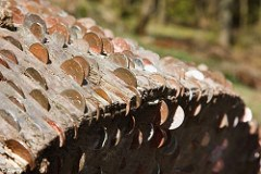 WISHING TREES: TRUNKS STUDDED WITH COINS FOR LUCK
