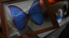 NANOTECHNOLOGY BRINGS BUTTERFLY COLORS TO CURRENCY