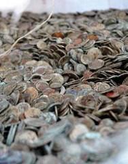 CHINESE MEN ARRESTED IN SCRAP COIN SALVAGE SCHEME