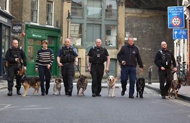LONDON BRIDGE DOGS WIN PDSA ORDER OF MERIT